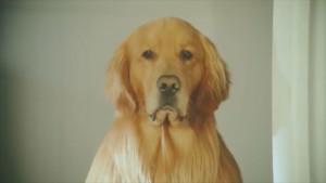 Amazon_Dog_PosterFrame2