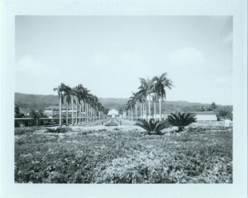 B&W Polaroid Mormon temple in Laie